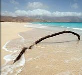 socotra