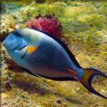 Alles over snorkelen & duiken in Dahab – Egypte
